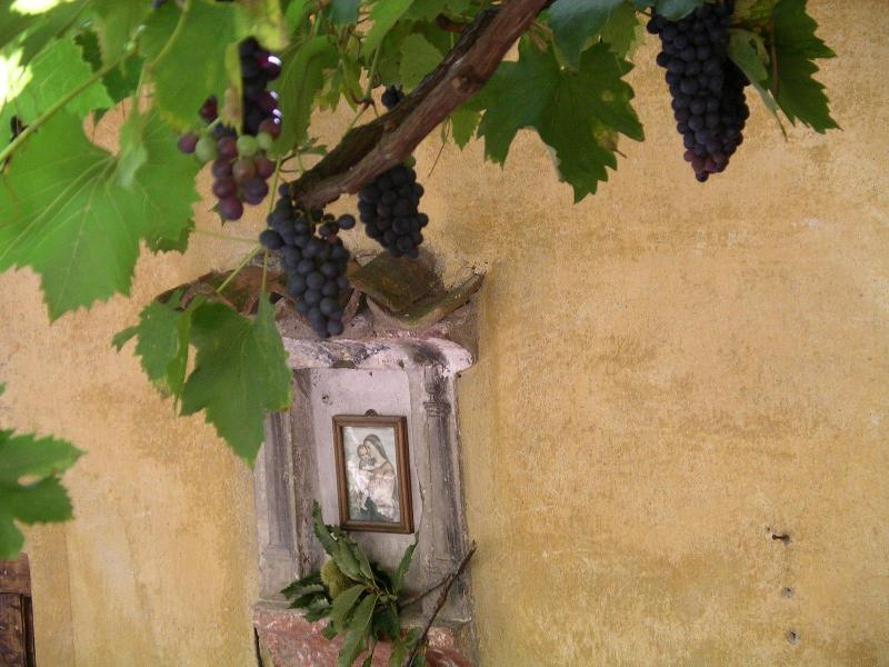 The outside sitting area with grapes in autumn - Casa Parrucchiere in Gandria (Lugano, Switzerland) - Gandria - rentals