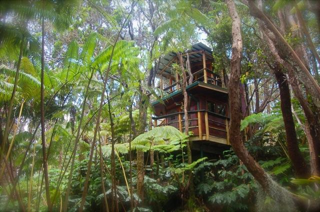 treehouse in forest of hapu'u and ohia - Exotic Treehouse at Kilauea Volcano on Big Island - Volcano - rentals