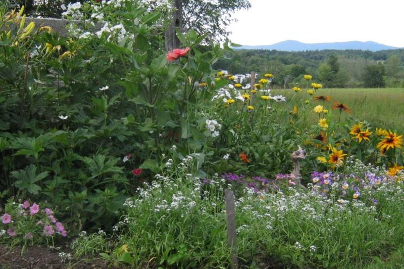 Midsummer flowers frame the magnificent mountain view. - Clifford Country Bed & Breakfast - Mount Holly - rentals