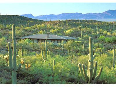 Tucson Retreat in Desert Wildlife Sanctuary - Tucson Vacation House in a Wildlife Sanctuary - Tucson - rentals