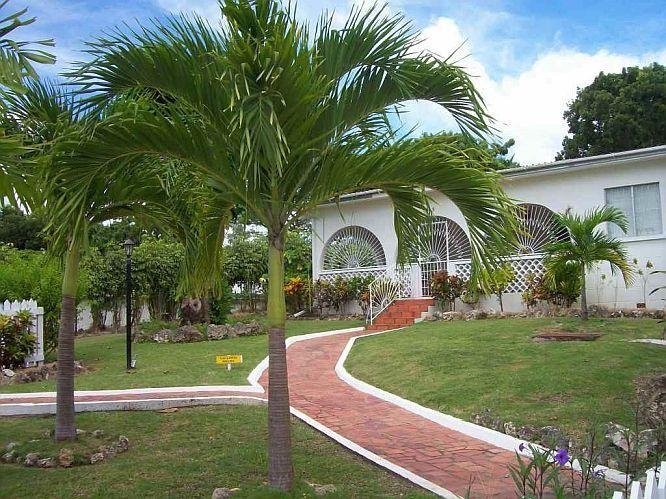 Tropical setting - Villa Guido-Tropical 3Bd on West Coast near Beach - Sunset Crest - rentals
