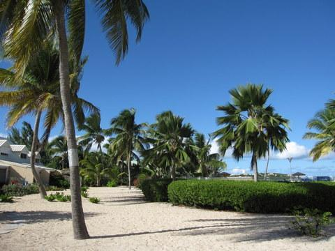 Nettle Bay Beach Club; the beach in front of the condo, under coconut trees - Kiss Kiss, 1 BR  apartment on white sandy beach - Baie Nettle - rentals