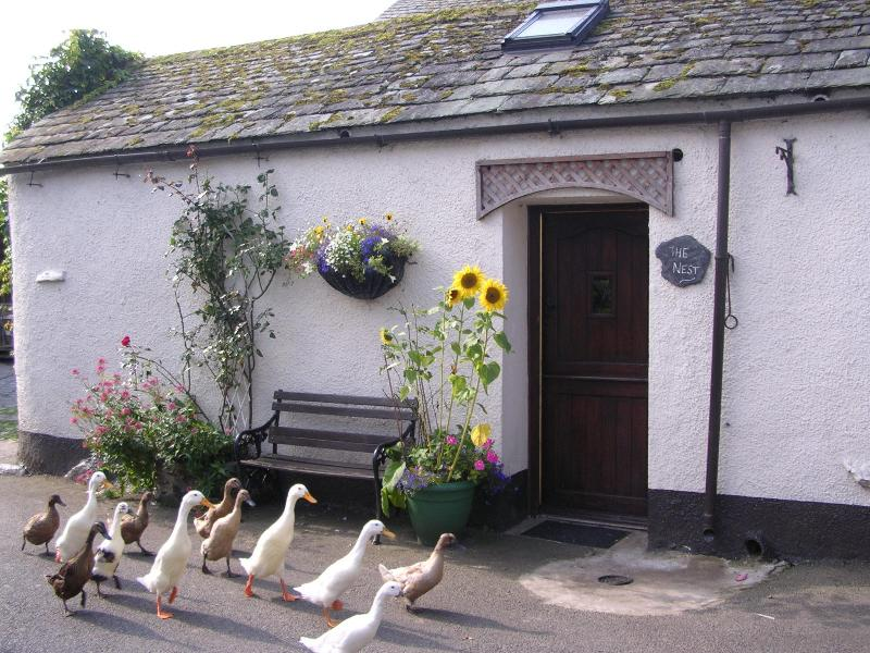 Our Puddle Ducks passing The Nest - The Nest for 2 in village by farm,stream,ducks - Keswick - rentals