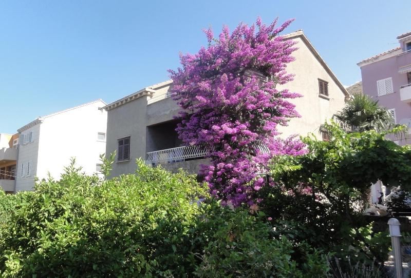 Garden area around house - Apartment  bungevilia in center  of Dubrovnik - Dubrovnik - rentals