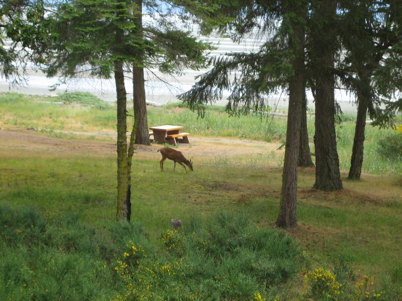Deer feeding in park just outside our window - BEACHFRONT LUXURY 3 BEDROOM - JUNE 15-20 AVAIL - Parksville - rentals