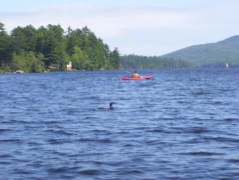 Kayaking on Pitcher Pond - Charming Lakefront Cottage on Pitcher Pond - Lincolnville - rentals