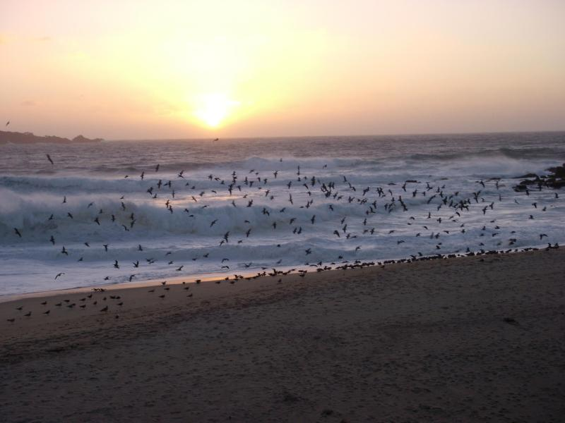 Carmel River Beach at Sunset...Minutes Away - SurfSong..Close to Beaches ..Private Hot Tub - Carmel - rentals