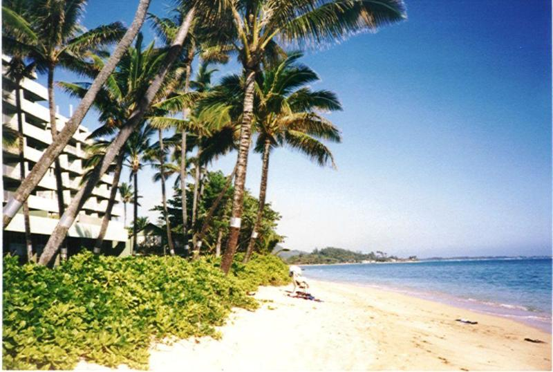 Reef protected 600 ft of sandy beach fronting building - Oceanfront Apartment 707 in Punaluu Oahu Hawaii - Punaluu - rentals