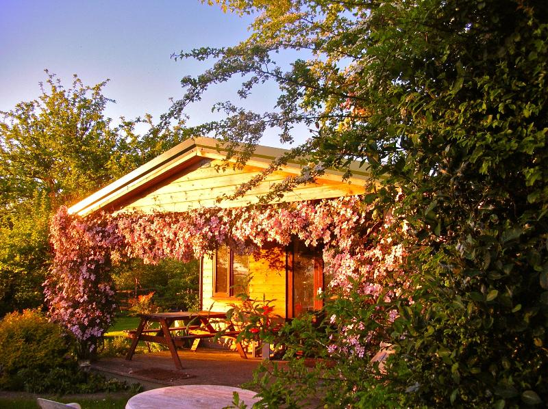 Orchard Cabin in the Spring - Orchard Cabin - Seaton - rentals