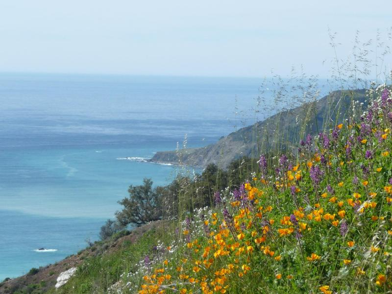 View of the Big Sur Coast - Eco-Getaway on Spectacular Big Sur Coast - Big Sur - rentals