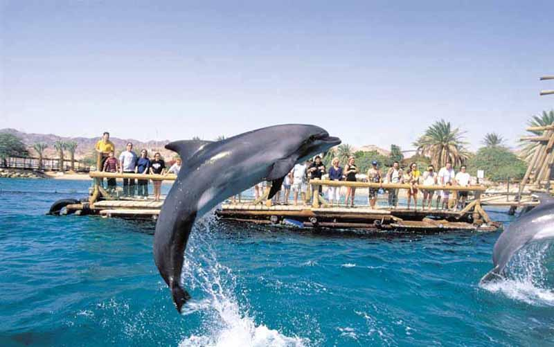 Dolphin Appartments Eilat - Nice vacation apartment in Eilat, Israel @ Red Sea - Eilat - rentals