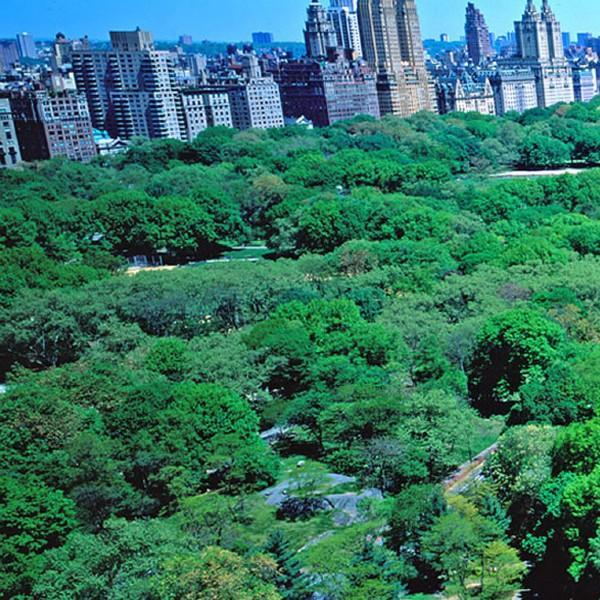 Your View - Two Bedroom Residence (Suite 1101-62) - New York City - rentals