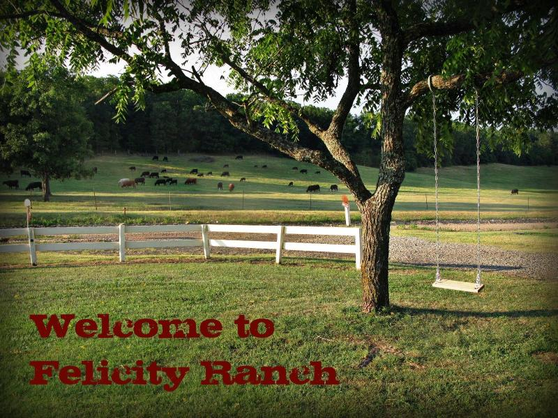 Welcome to the ranch! - Felicity Ranch - over 180 acres to explore! - Mountainburg - rentals