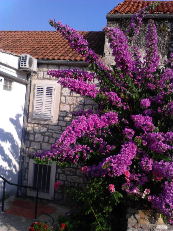 Rooms-Kety Lepur - Image 1 - Slano - rentals