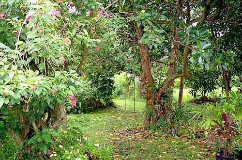 Garden - Hana Maui Botanical Garden B&B/Vacatdion Rentals - Hana - rentals