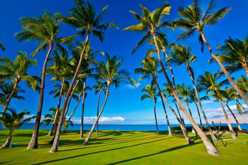 Grass Lawn and Property Running Down to the Ocean's Edge - Sapphire Seas Beach Estate - Kihei - rentals