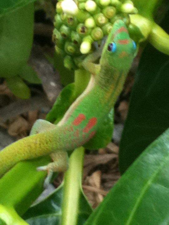 local wildlife - Tropical Mo'o Hale - Keaau - rentals