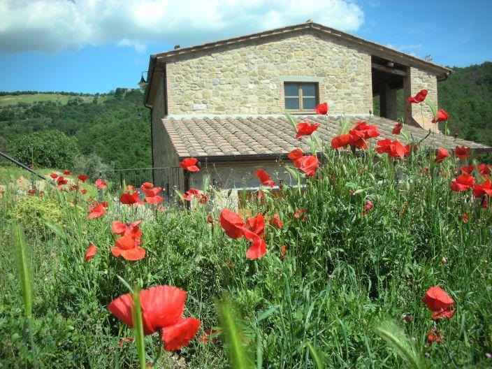 Our spring poppies by your vacation home - Countryside apartment accessible wheelchair users - Passignano Sul Trasimeno - rentals