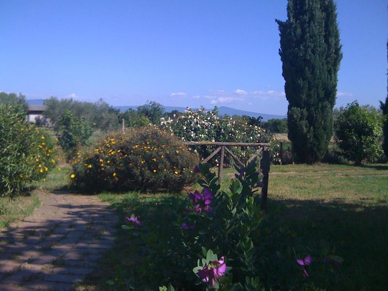 Garden toward the entrance - old countryhouse with pool immerse in olivetrees - Viterbo - rentals