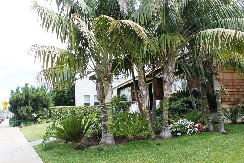 Nestled amongst the Palms. - Beautiful Home - Ocean Views - walk to restaurants - La Jolla - rentals