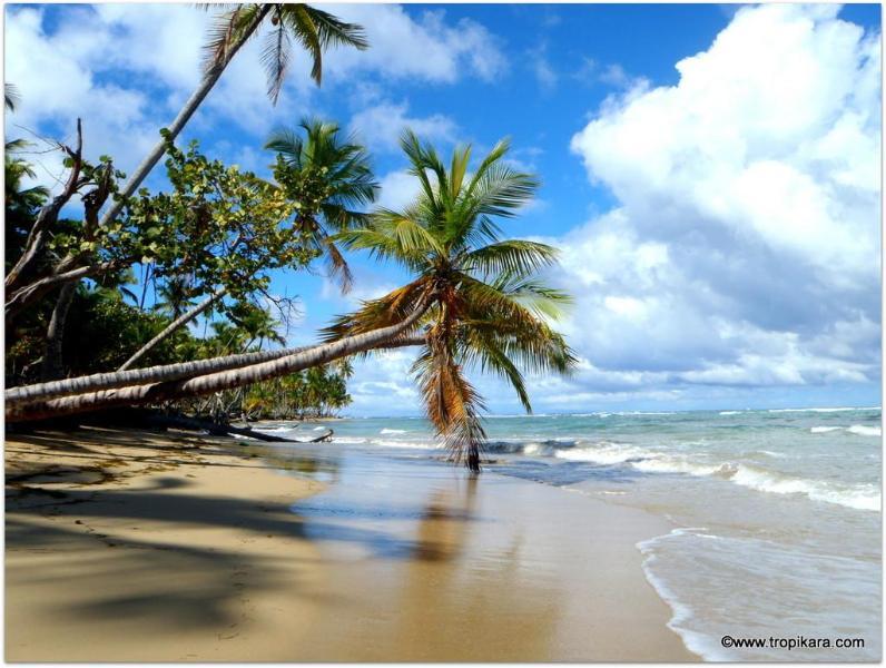 Plage Las Terrenas - Close to beach and Las Terrenas Village,2 bedroom - Las Terrenas - rentals