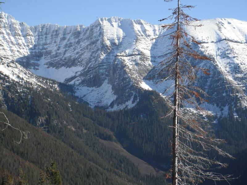 Beautiful Montana - Mountain View Meadow Cottage Glacier National Park - Glacier National Park - rentals