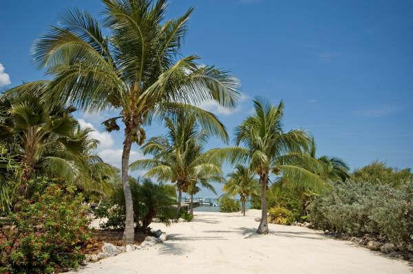 back yard - Pool, Dock, Sandy Beach, Privacy, Open Water - Summerland Key - rentals