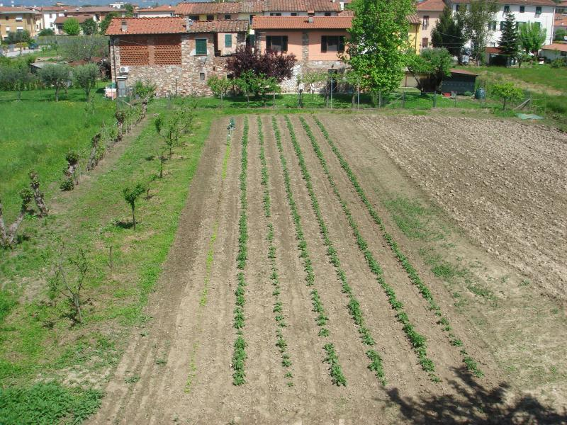 the view from the kitchen - Quiet Apartment with Privacy, Close to Center of Lucca - Lucca - rentals