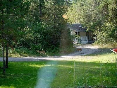 Eagle moon cottage in summer  - Eagle Moon Cottage - Grand Forks - rentals