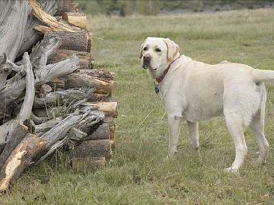 A Dog's Life! - Home In Paradise next to Yellowstone National Park - Livingston - rentals