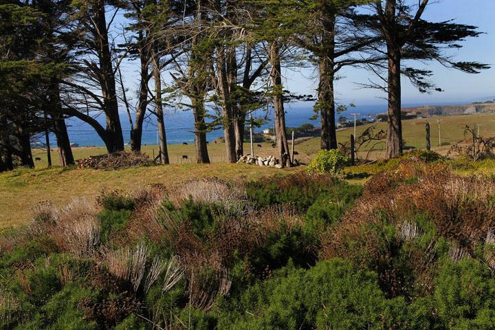 Almost Paradise - Image 1 - Bodega Bay - rentals