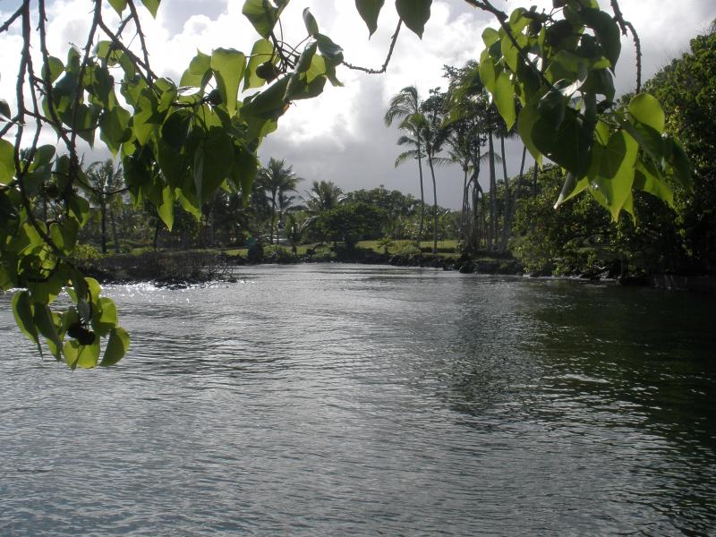 Warm fresh water flows into this inlet a few doors from the house - Hawksbill House, Kapoho Beach, helping the turtles - Kapoho - rentals