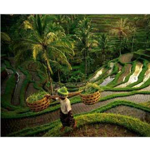 Nearby Rice Terraces - Charming Home in Lush Tropical Setting, Ubud, Bali - Ubud - rentals