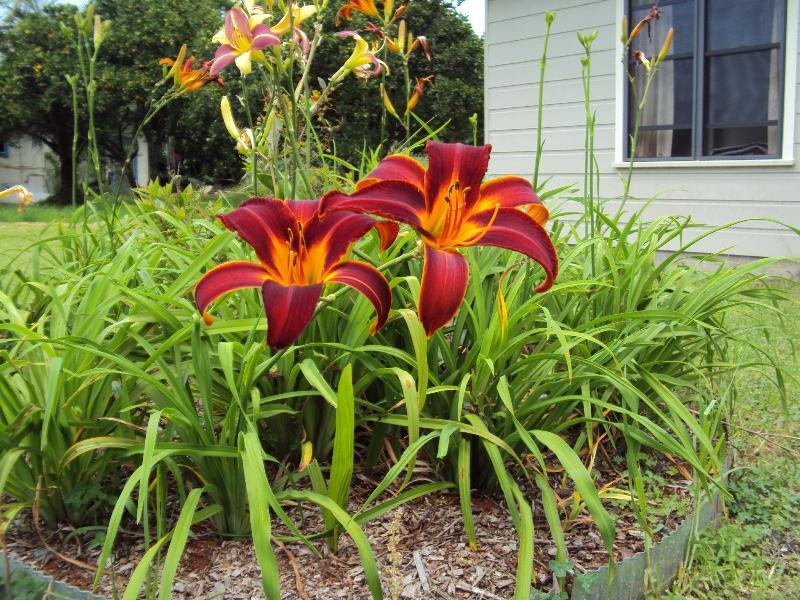enjoy the garden - The Watertank B&B - Moorland - rentals