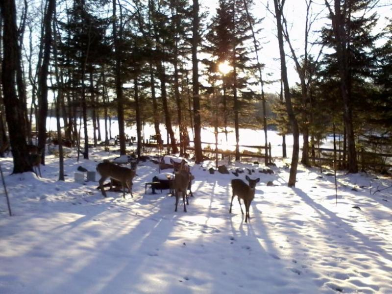 Are these Shoppers/Skiiers Arriving or Hunters? - Secluded Lakefront Getaway-SPRING W/E's Only $595 - Mount Pocono - rentals