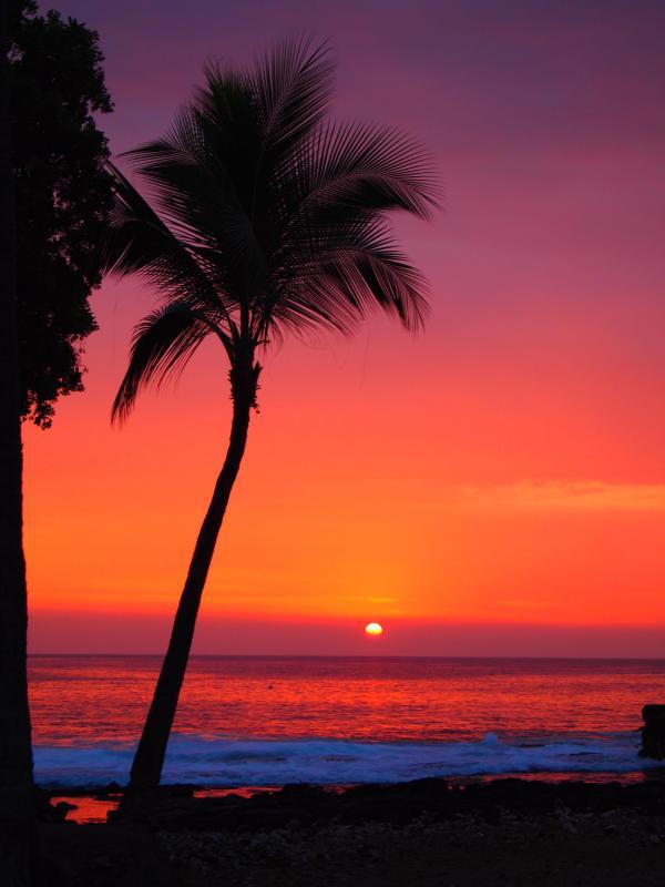 Kona Sunset - Dolphins/Whales from Lanai 1 bd + loft Ocean View - Kailua-Kona - rentals