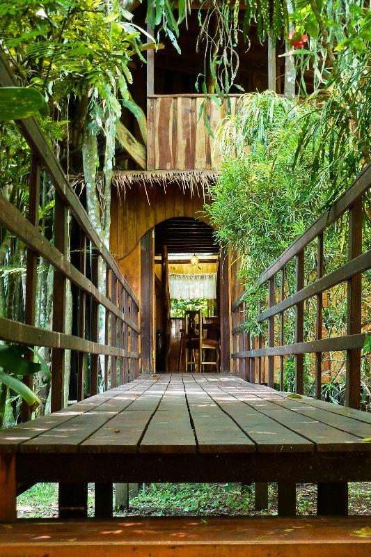 Bridge entrance to treehouse - A Jungle-Beach Tree-House In Cahuita - Cahuita - rentals