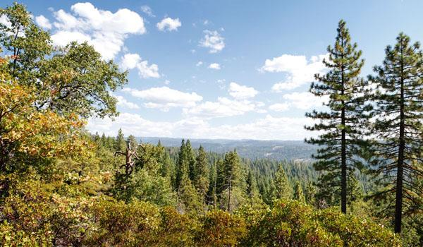 Nestled in the Sierra pines near Big Trees - Image 1 - Arnold - rentals