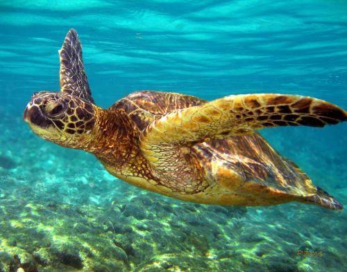 Turtle House - Image 1 - Hawaii - rentals