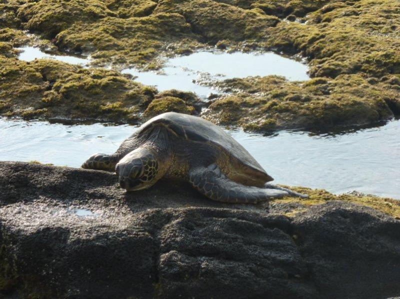 A local resident - Bargain absolute oceanfront spectacular views - Kailua-Kona - rentals