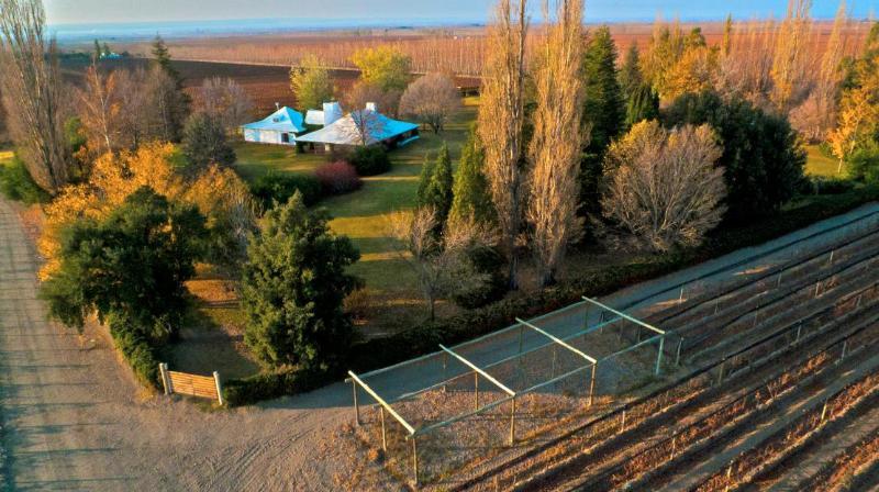 Park & Vineyards - Casa Palmero Wine House, Uco Valley, Mendoza - Mendoza - rentals