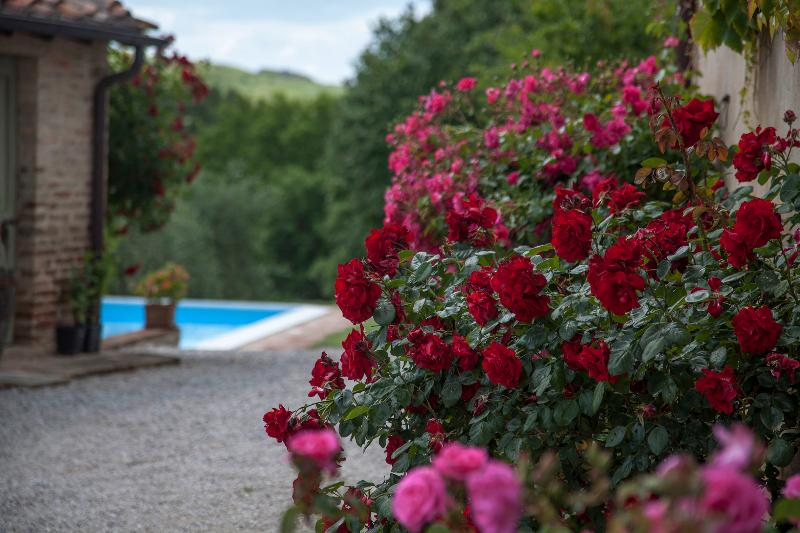 Roses - 5 BDR Villa, Pool, Wifi, AC in Siena Countryside - Siena - rentals
