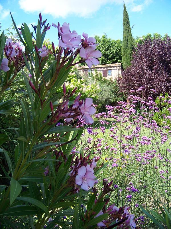 Les Cypres cottage - Les Cypres - Caunes-Minervois - rentals