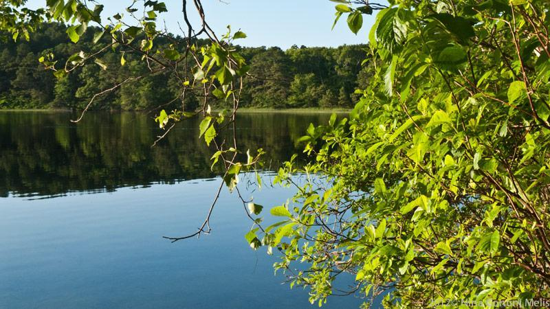 Pond View - Wellfleet-Cape Cod National Seashore Rental/Pond - Wellfleet - rentals
