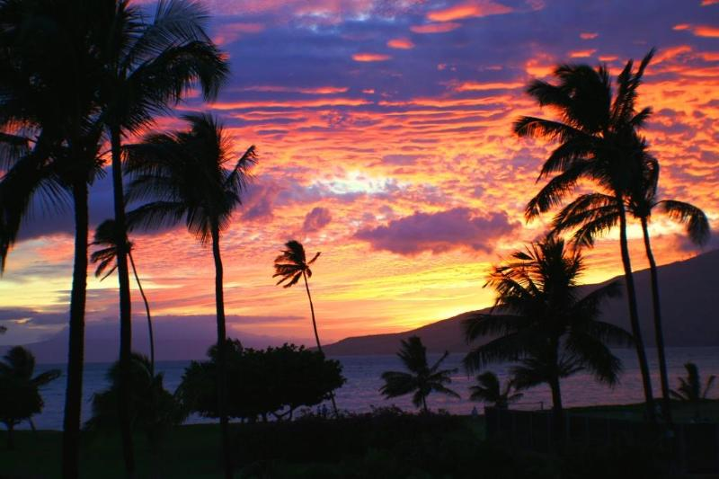 Sunset from property - Beautiful Ocean Front 1 Br Condo in Kihei - Kihei - rentals