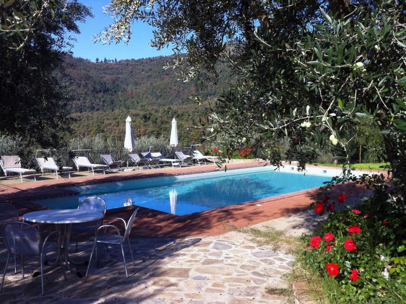 Pool with olive tree pergola - Villa Margarita, Garden Apartment with lovely Pool - Castiglion Fiorentino - rentals