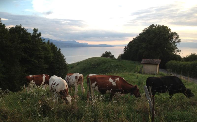 You are in Switzerland - Lutry with a bird's view of Lausanne / Lake Geneva - Lutry - rentals