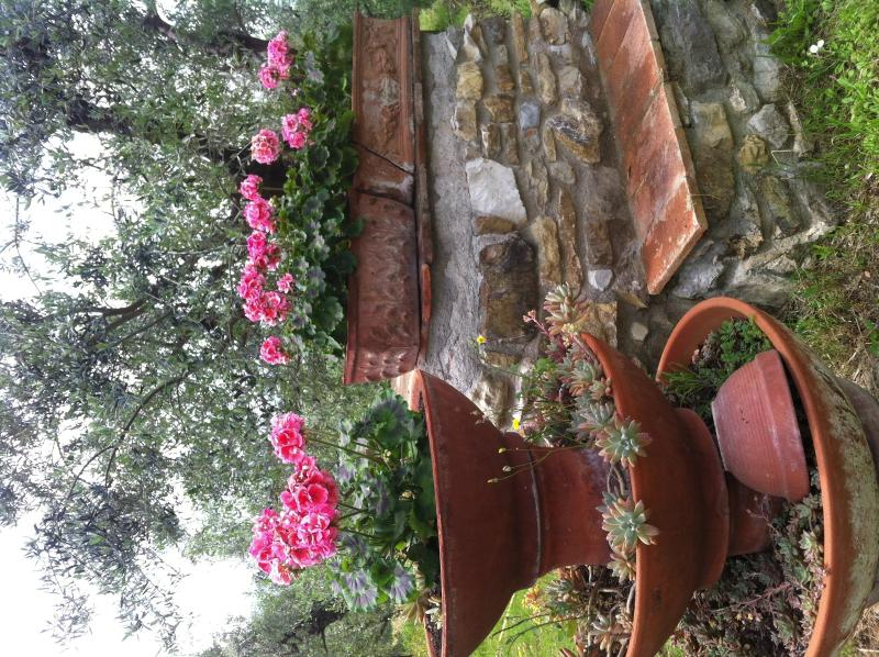 flowers in the garden - Royal  country inn near florence - Calenzano - rentals