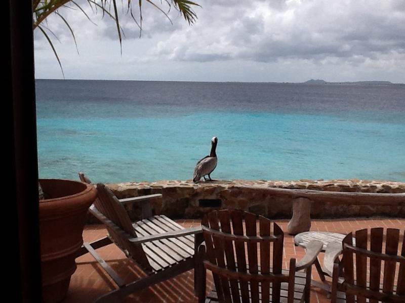 Pelican - Very Special Ocean Front Beachhouse - Kralendijk - rentals