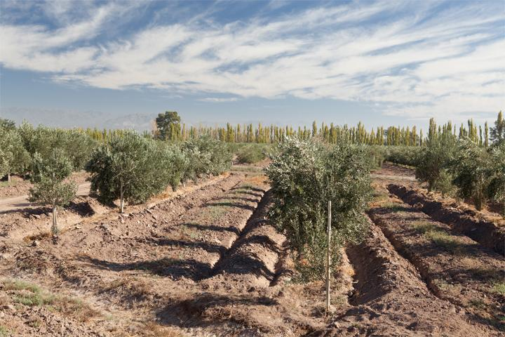 FARM - stay at an olive farm with resto bar and farm - General Lavalle - rentals
